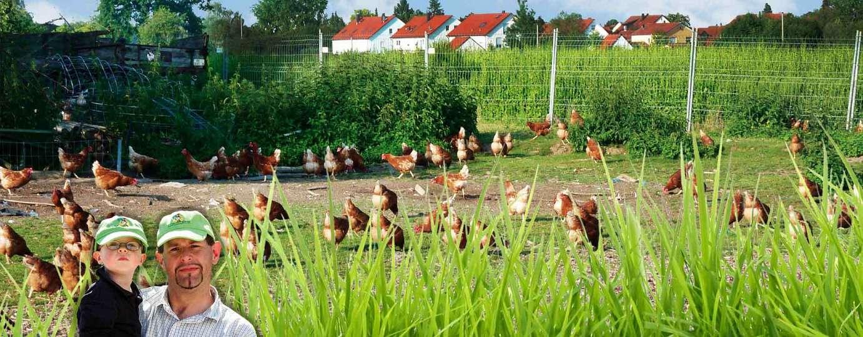https://www.happy-chicken-farm.de/uploads/images/Gallery/header/hcf_hg_6.jpg